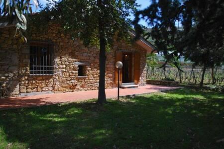 Rustic farmhouse in the vineyard - Imperia - House