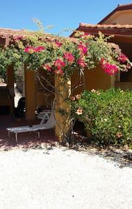 Peonia rosa vista mare - Peonia Rosa - House