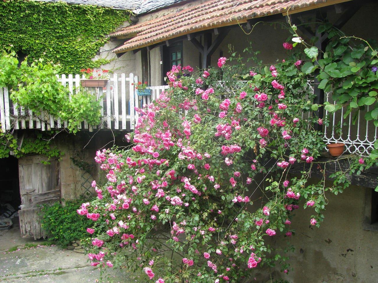 The rose strewn balcony