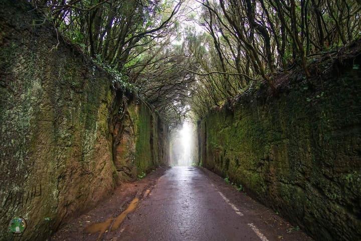 carretera camino del tejo