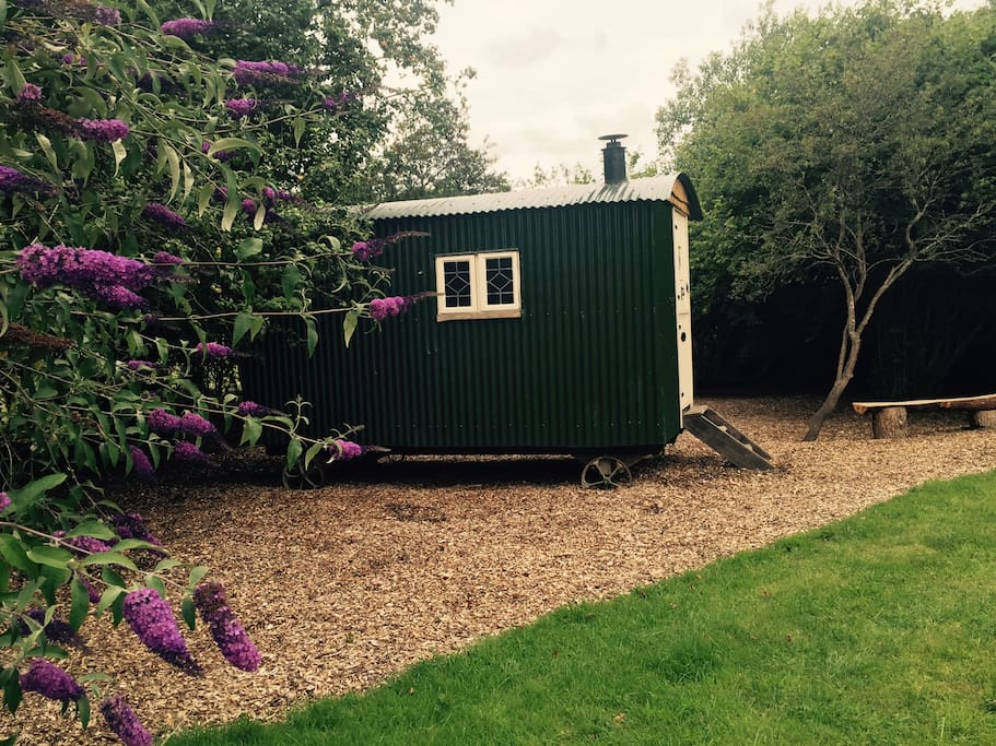 Our Shepherds Hut is nestled in the hedgerow surrounded by nature