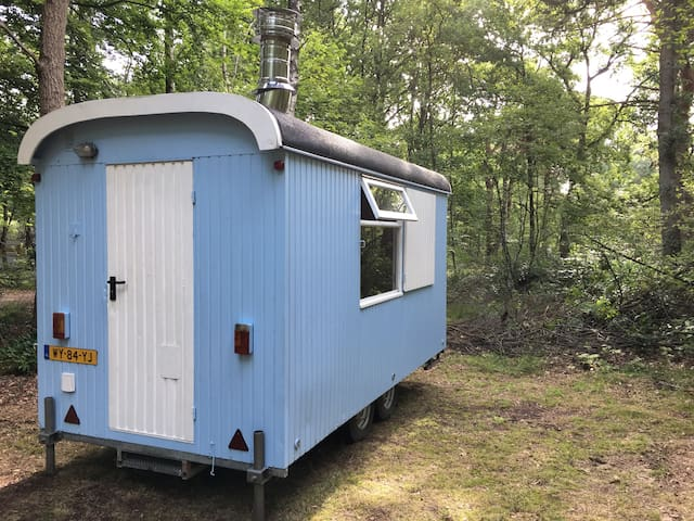 Tiny house experience on foresty camping