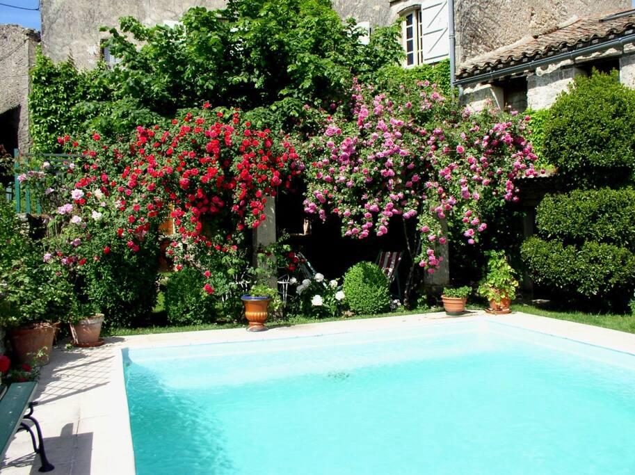 Piscine 5x6 en cour intérieure entourée de roses