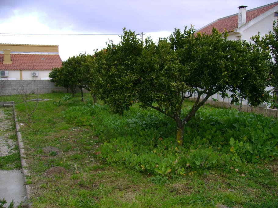 Part of the backyard - fruit trees