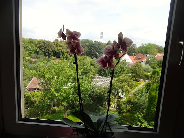 Zentral, grüne Aussicht, ruhig  - Regensburg - Appartement