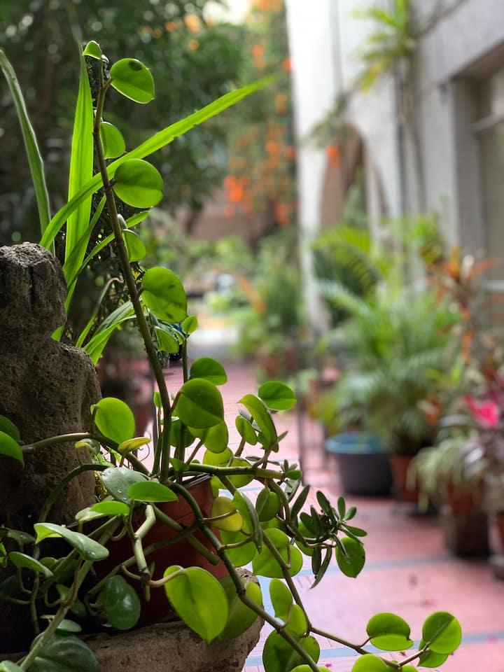 La casa de las plantas (zona centro)