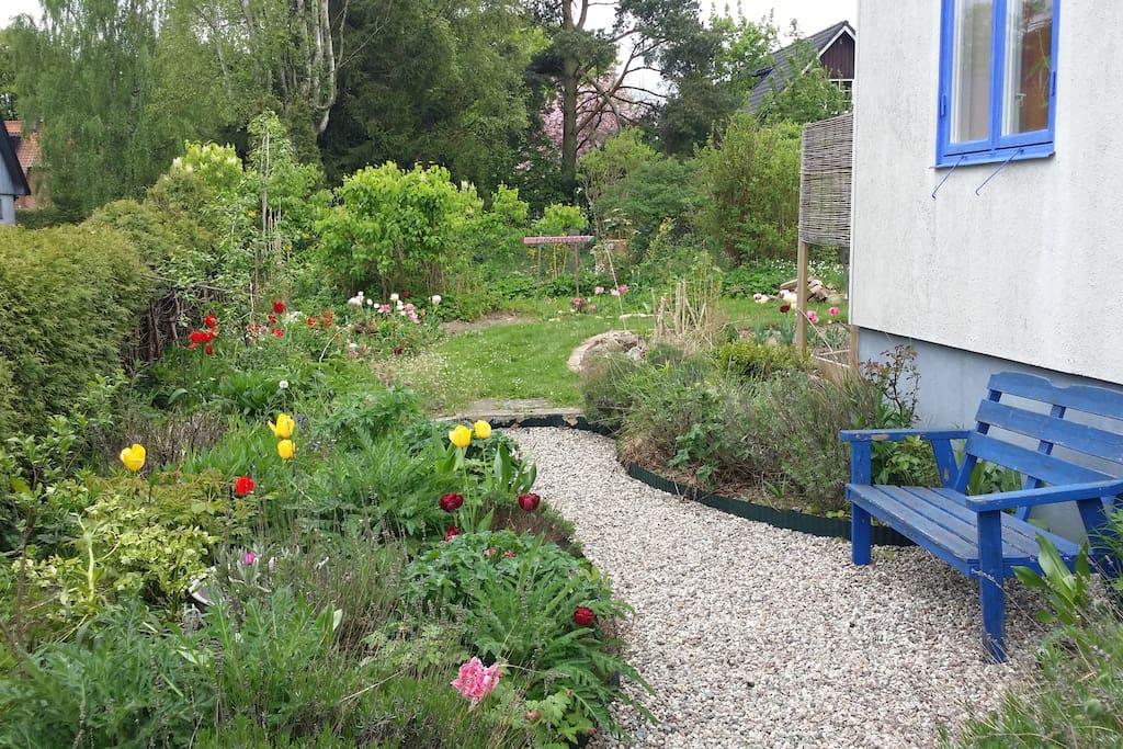 Trädgårdsgången på väg till stugan
