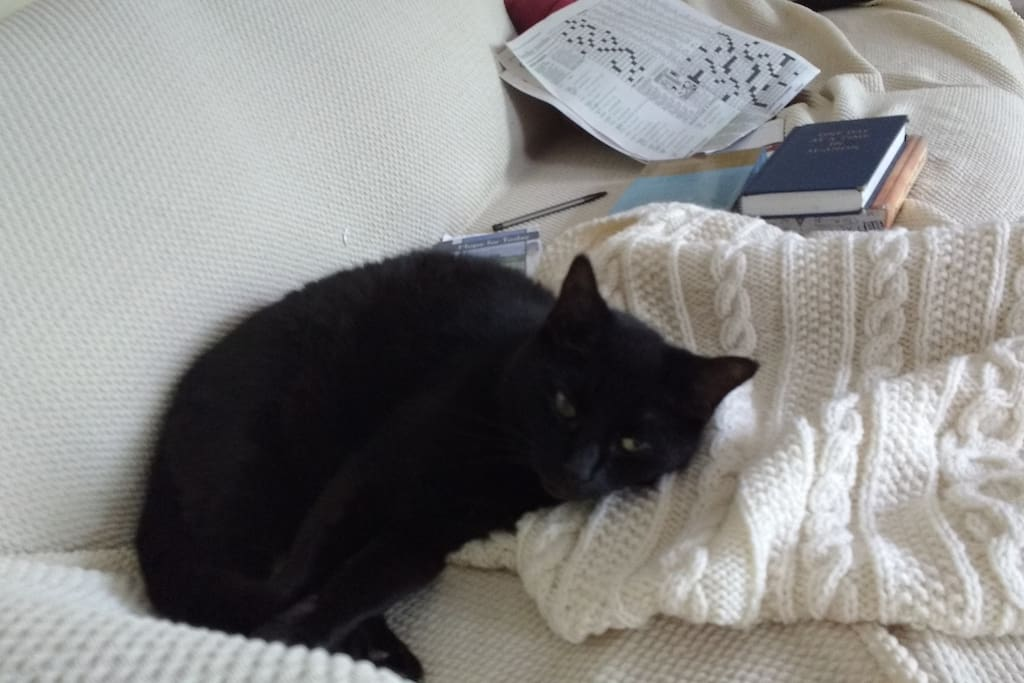 Shadow, our 17 year old cat will share the house with you  (if she must) :)