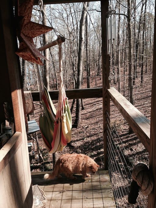 Treetop Beech Dreams Treehouses For Rent In Seneca
