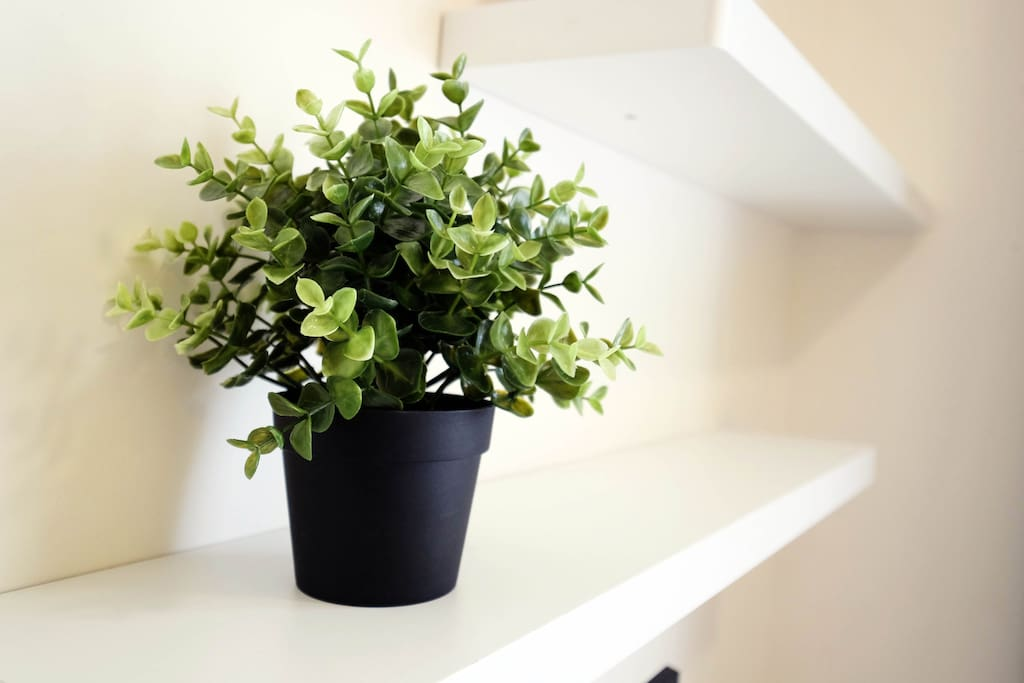 Brighten up your day with some green plants