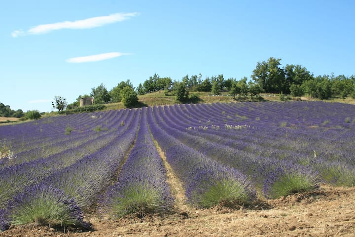 Day trip to the Provence lavender fields
