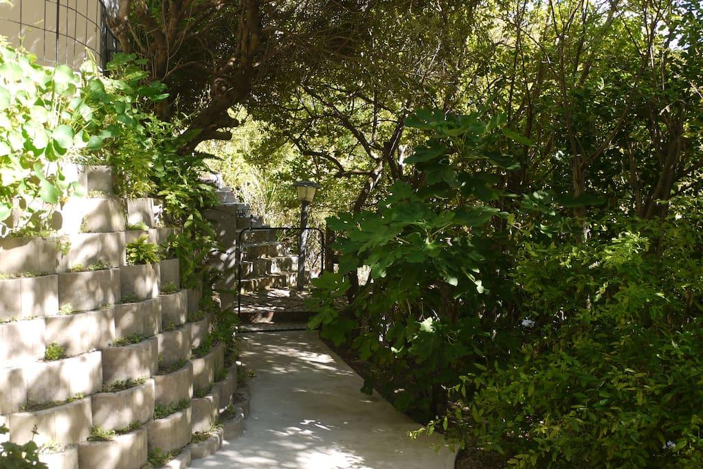 Stepped pathway through garden