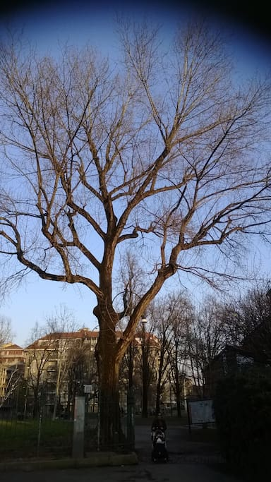 Il giardino dei semplici di daniela apartments for rent for M innamorai giardino dei semplici accordi
