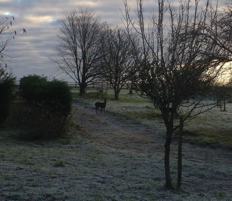Deer grazing in the early frost, viewed from the Shepherd's Hut