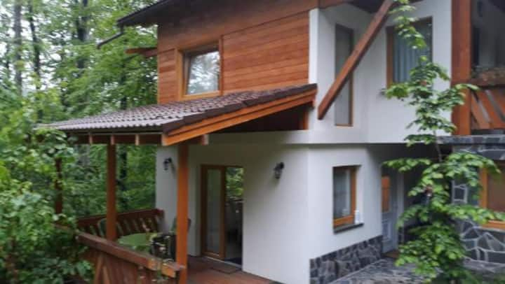 Cabana Pintea Apartament 2