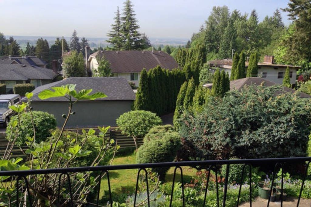 View of the back yard
