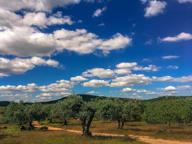 In the most wonderful Middle of Nowhere near Serpa (Baixo Alentejo)