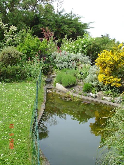 coin bassin dans jardin, les enfants fascinés par les poissons rouges, les adultes par les nénuphars
