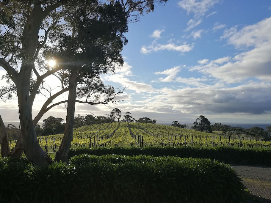Breathtakingly view of vines and sea at the front of the house