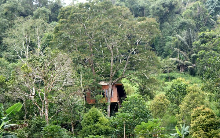 Candlenut Treehouse