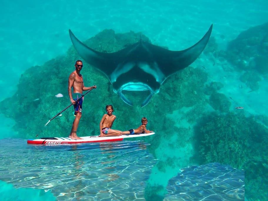Snorkeling raies manta