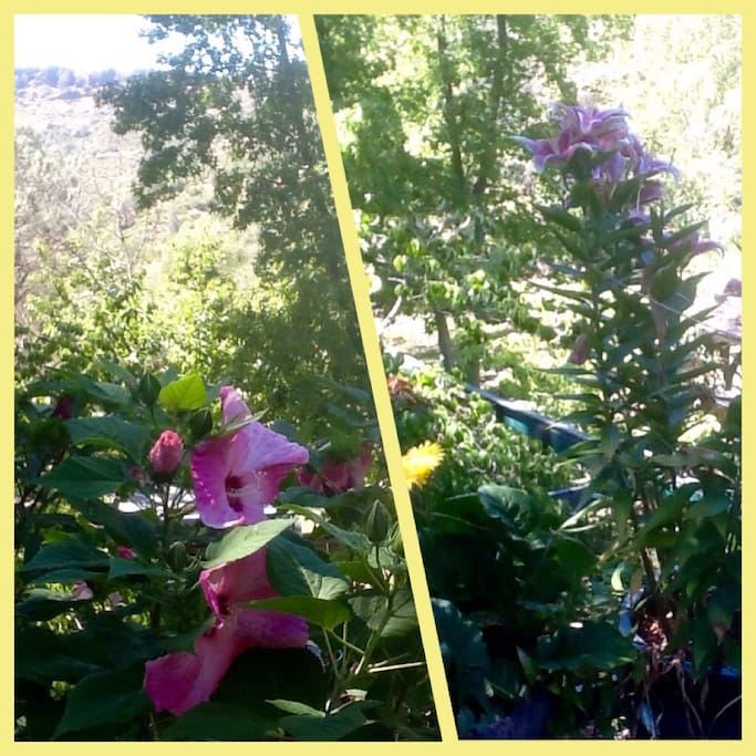 Cliffs that make Butte Creek Canyon, flowers on my deck in summer