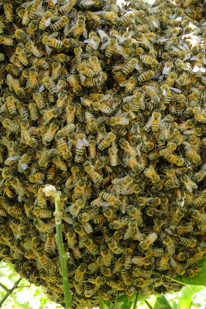 Feral Hive