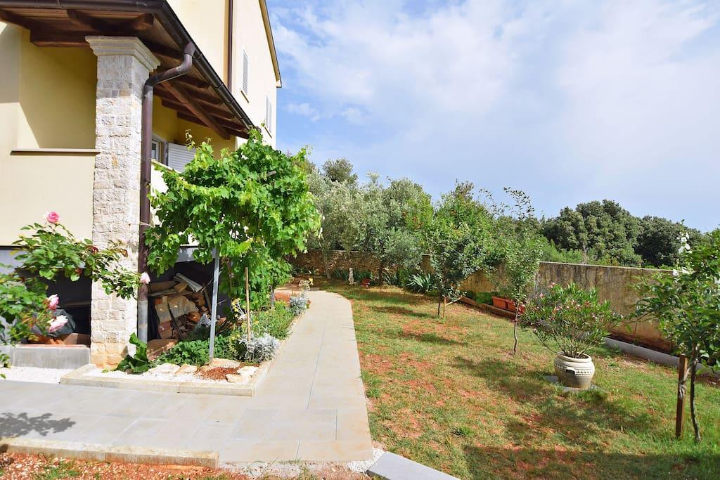 garden - back yard