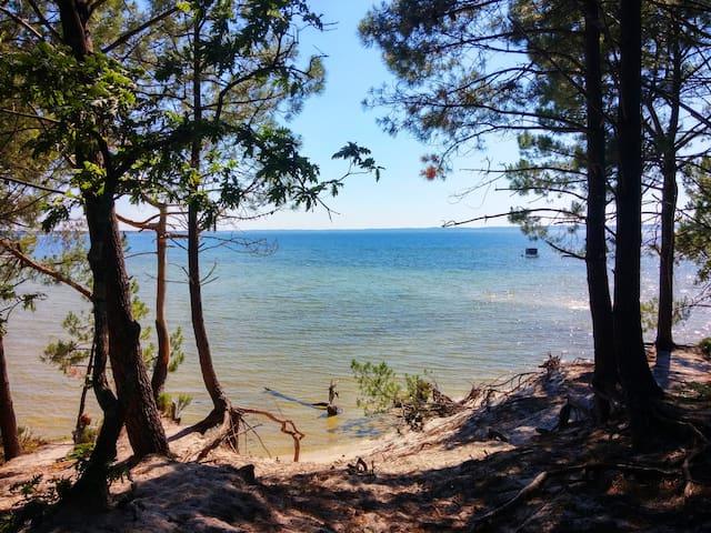 Les plages du lagon, la forêt de pins au bord de l'eau. Les jeux d'ombres et lumières.