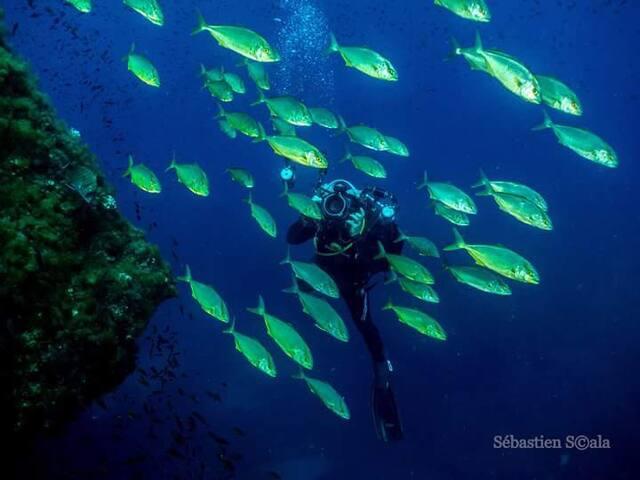 pescados del mediterranio autoctonos