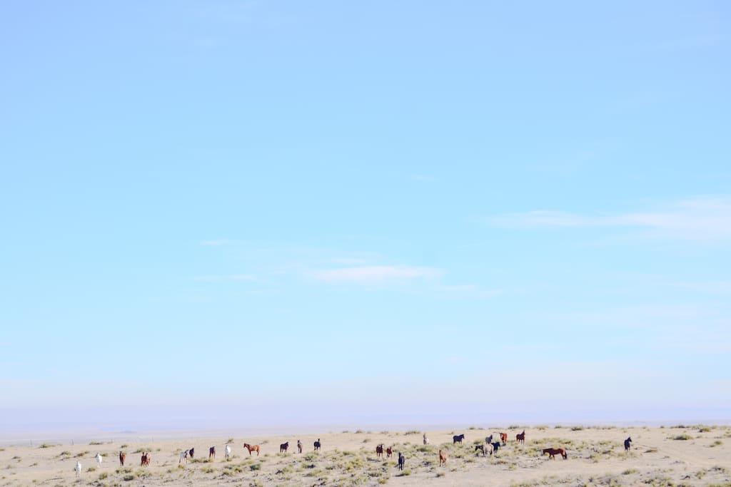 Fall Sanctuary Herd