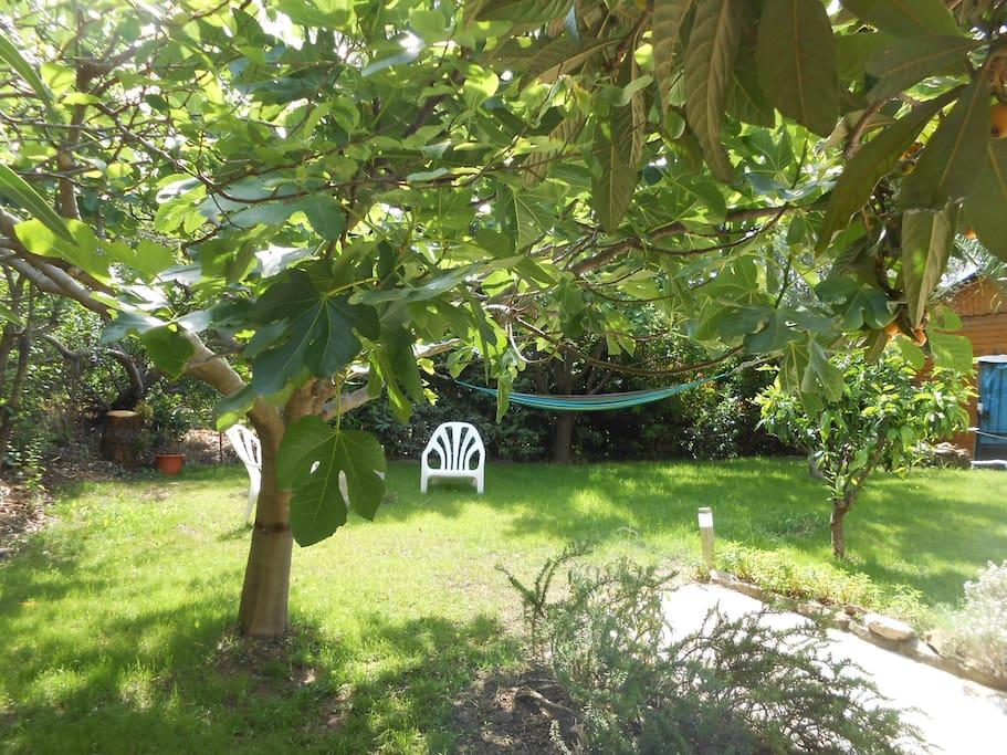 jardin avec hamac