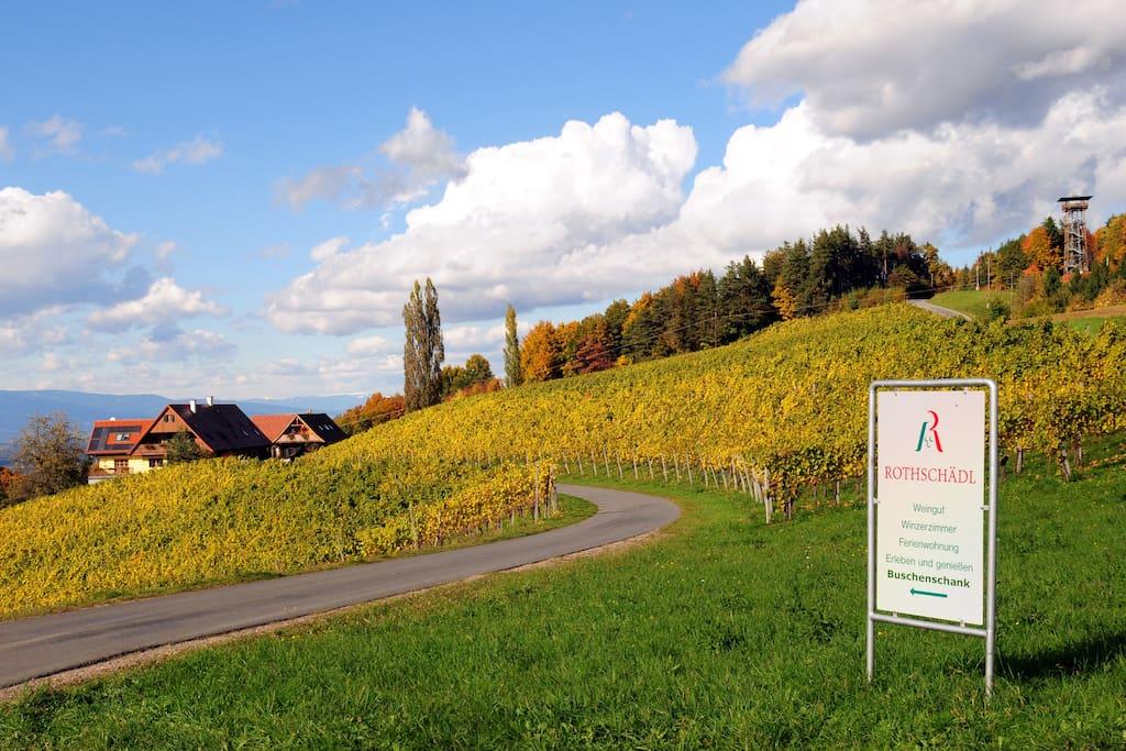 Das Weingut Rothschädl mitten in den Weingärten in der herbstlichen Südsteiermark