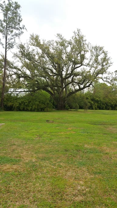 2 acres of property with beautiful live oak trees