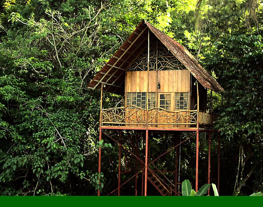 Rainforest tree house w hot springs treehouses for rent for Tree house for sale costa rica