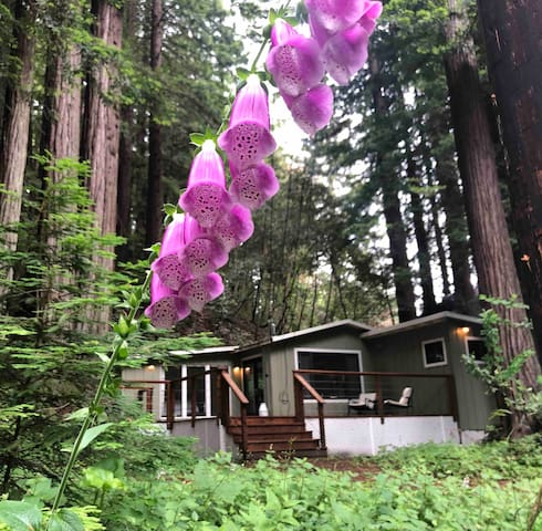 Coastal Redwood Getaway on a Creek
