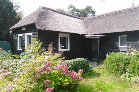 Vrijstaand rietgedekt buitenhuisje in de natuur - Midlaren
