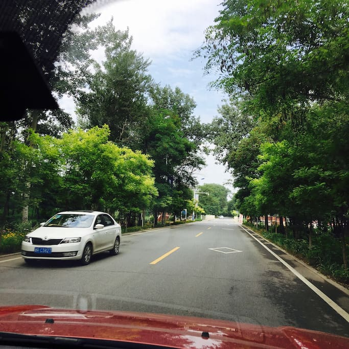 到家前的林荫路~穿越富氧森林!