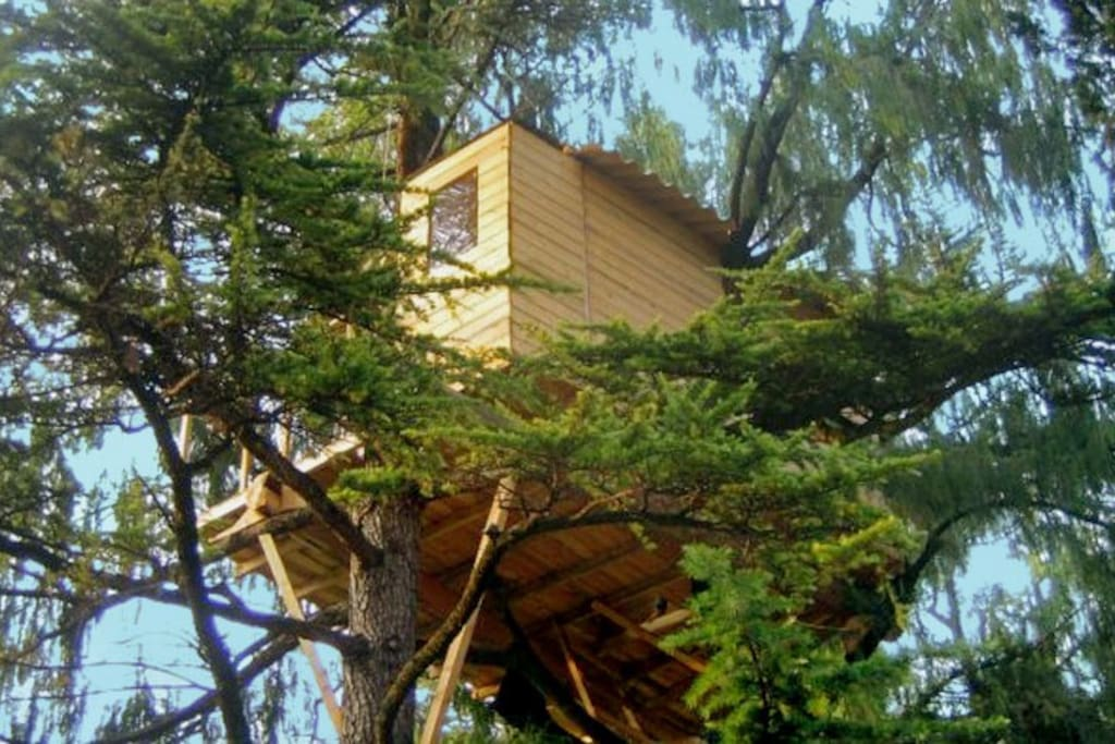 The tree house in the park