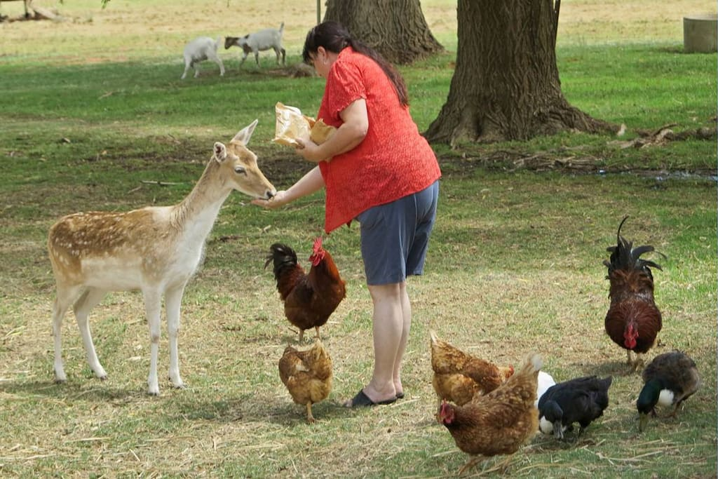 Hand feeding the animals in our zoo!