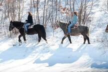 Year Round Horseback Riding.