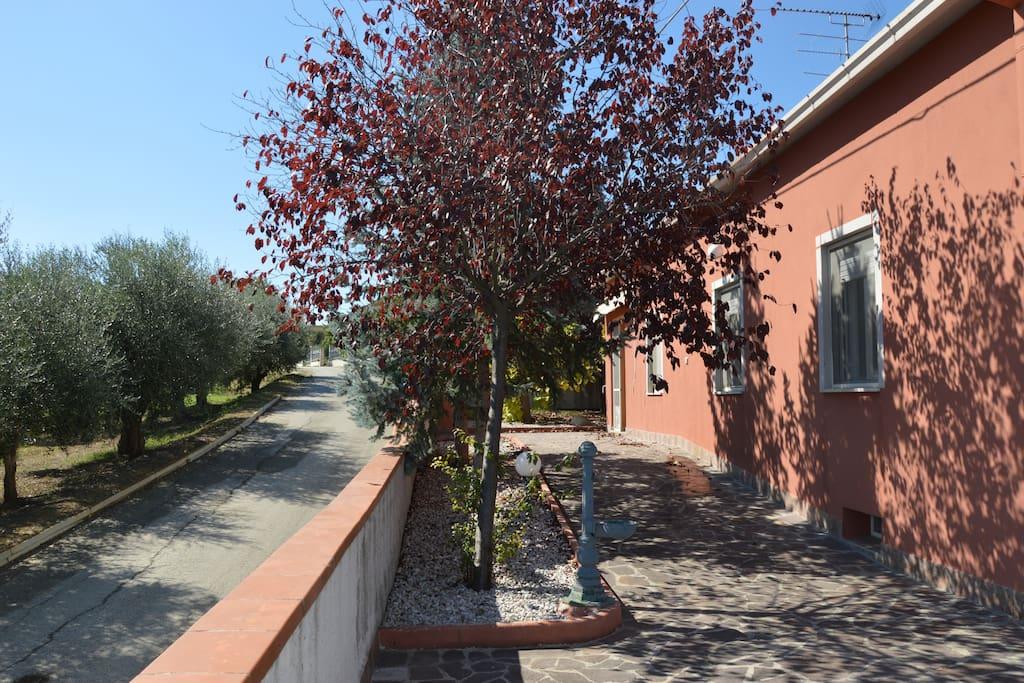 Strada con gli ulivi