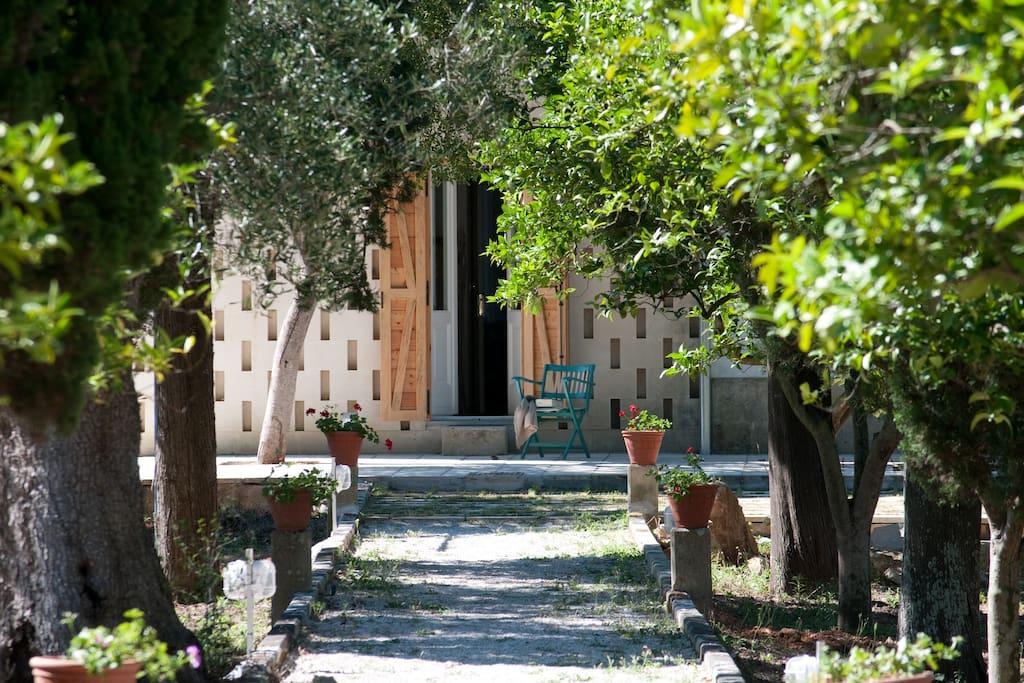 Le camere dell' Agriturismo Villa Coluccia Casa Padronale del 1940 affacciano sull'agrumeto e gli uliveti di Contrada Guidini a Martano, in Salento Lecce