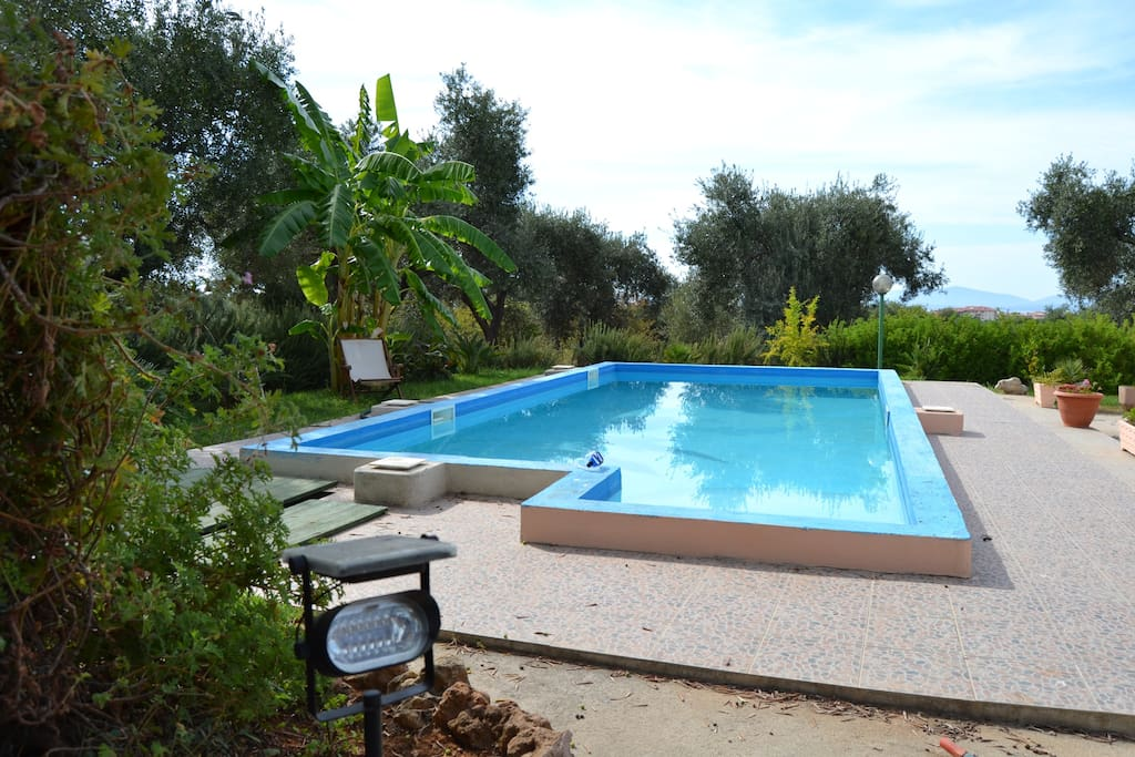 This is our swimming pool, surrended by olive trees, flowers, grass.