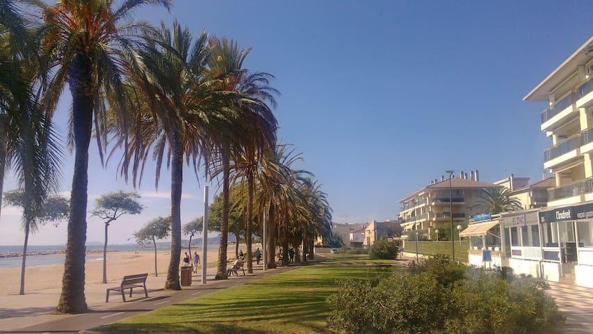 Apto. 1ª línea de playa 4/5 plazas.