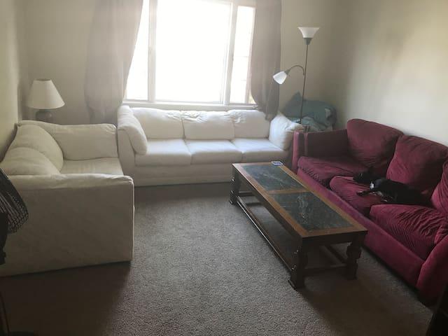 Elmwood Village Couch - Crash for Niagara Falls
