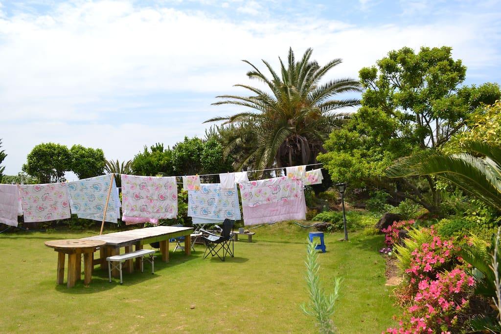 Garden of Hakuna Matata