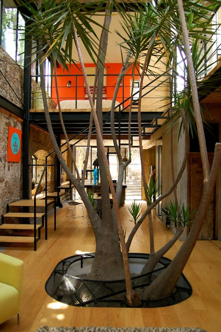 Looking towards our Dining/Kitchen area with our Yucca Tree