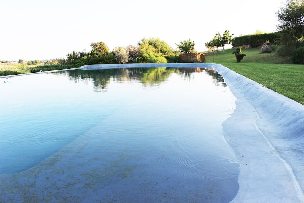 the pool's water and landscape