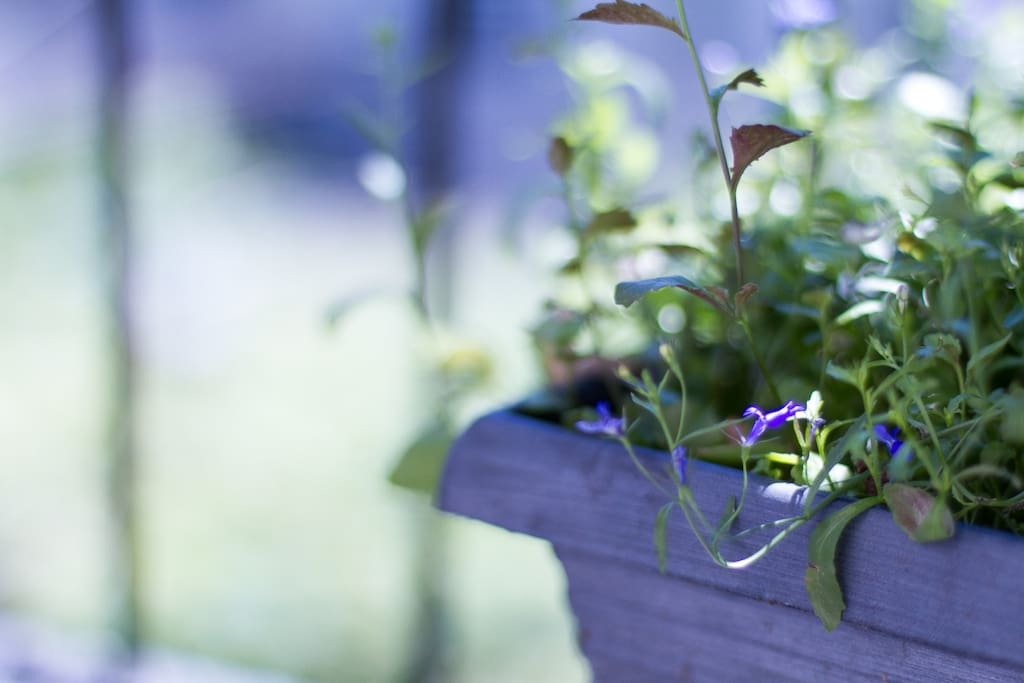 """mini garden"" on the bedroom window"
